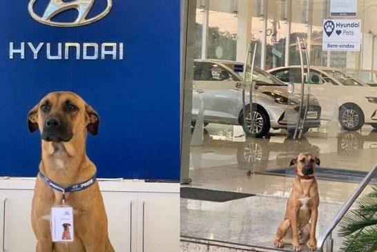 Perro callejero genera publicidad gratis a Hyundai